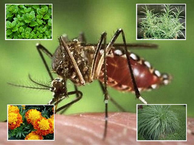 các phương pháp kiểm soát muỗi trong nhà