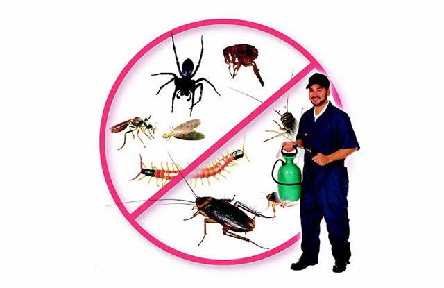 công ty cung cấp dịch vụ diệt côn trùng nào uy tín