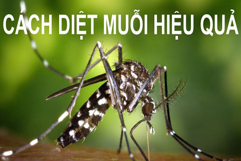 Cách diệt muỗi tự nhiên