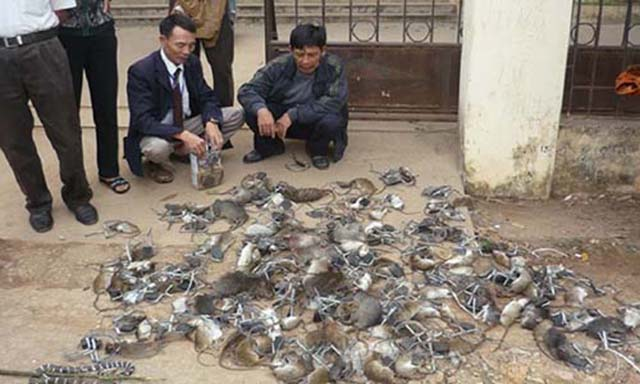 dịch vụ diệt chuột tại Diệt Côn Trùng DCT