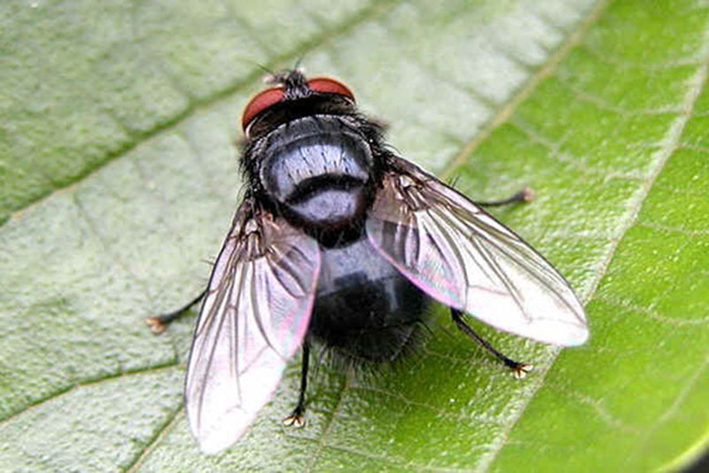 dịch vụ diệt ruồi tận gốc hiệu quả