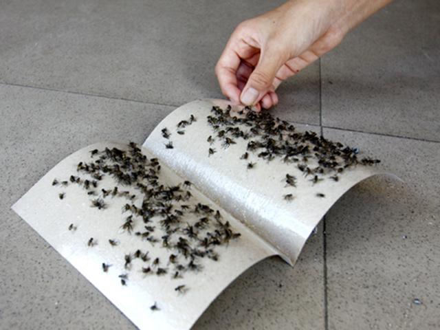 diệt ruồi bằng phương pháp vật lý