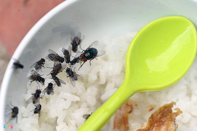 vì sao phải diệt ruồi