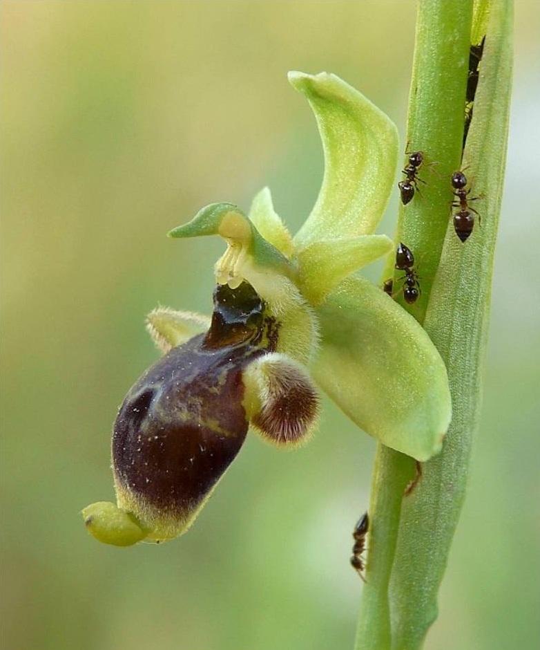 Kiến là mối đe dọa nguy hiểm đối với cây cảnh