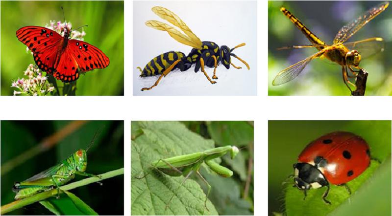 Rất nhiều các loại côn trùng có ích mang đến nhiều giá trị cho canh tác nông nghiệp