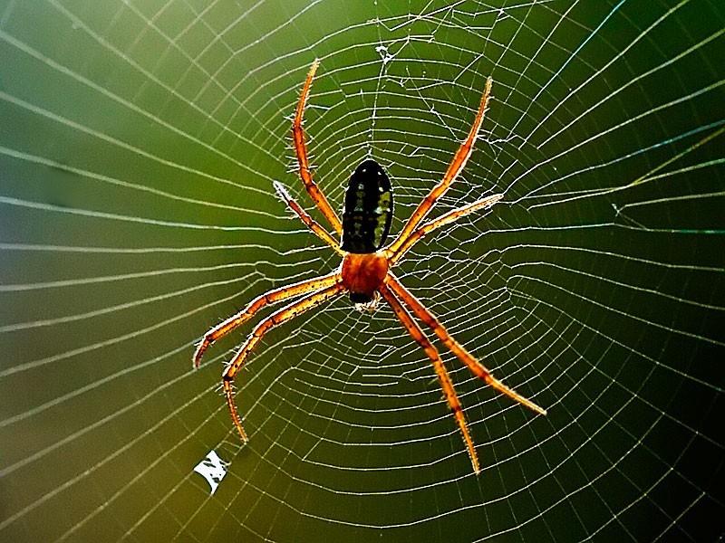 Nhện được xếp vào danh sách các loài côn trùng có ích bởi thức ăn chủ yếu của chúng là côn trùng
