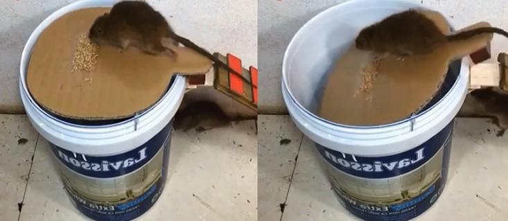 Làm bẫy chuột bằng bìa cứng