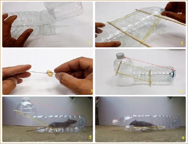 Làm bẫy chuột hiệu quả bằng chai nhựa