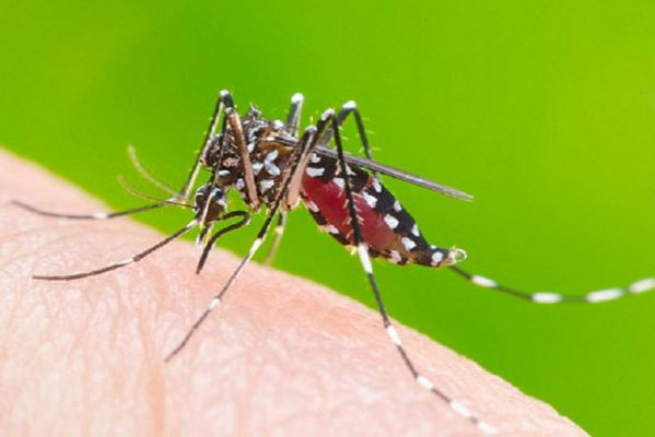 dịch vụ diệt muỗi hiệu quả tại nhà
