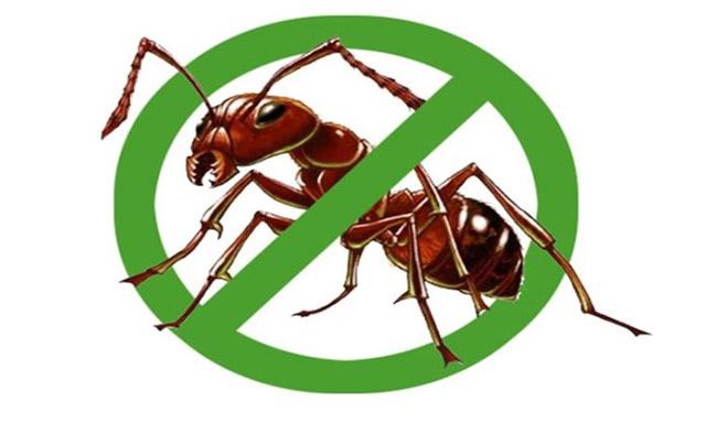 diệt kiến bằng phương pháp sinh học