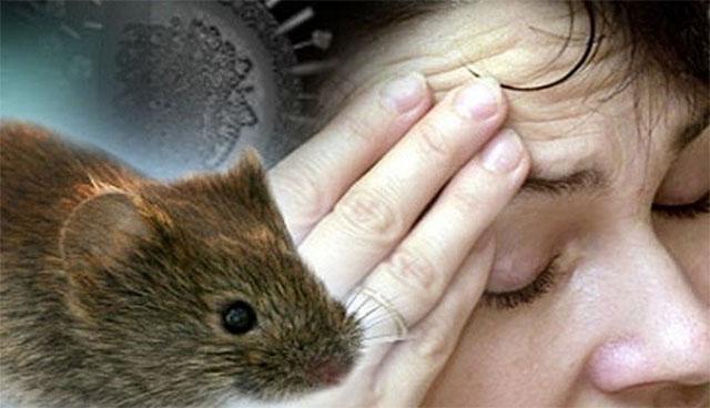 một số bệnh nguy hiểm khi bị chuột cắn