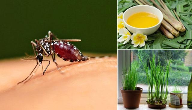 Một số cách đuổi muỗi hiệu quả