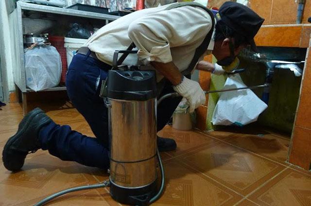 sử dụng dịch vụ diệt gián tại diệt côn trùng DCT