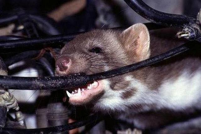 Cách diệt chuột cống hiệu quả nên áp dụng ngay – Diệt Côn Trùng đọc ngay để áp dụng