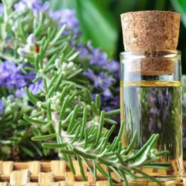 Tinh dầu hương thảo đuổi muỗi