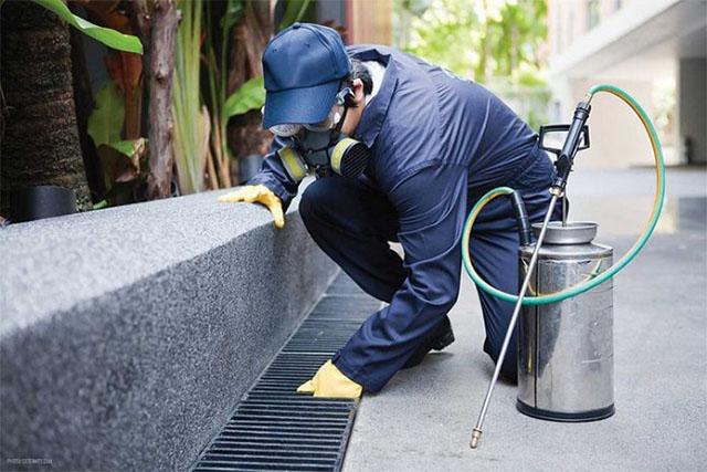 vì sao nên sử dụng dịch vụ diệt muỗi tại diệt côn trùng DCT