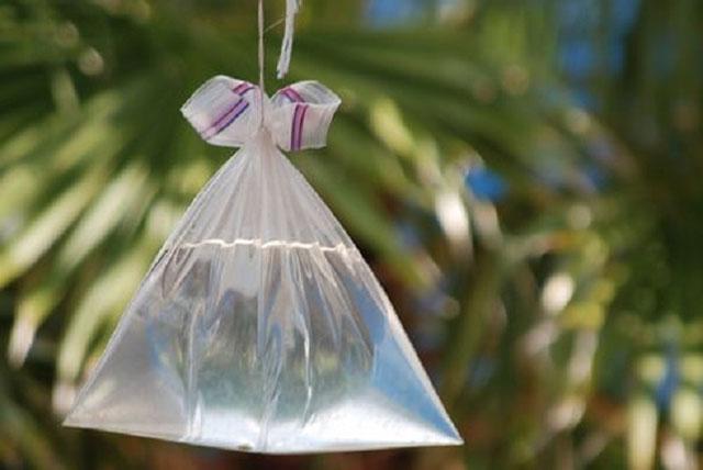 đuổi ruồi bằng túi nước đầy