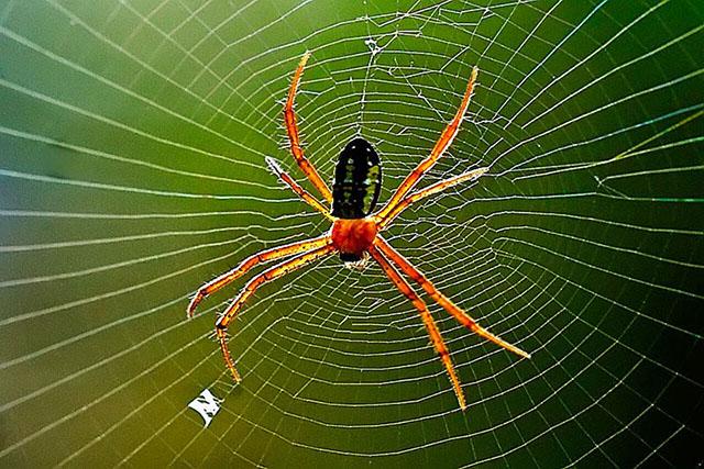 5 cách tiêu diệt nhện trong nhà hiệu quả