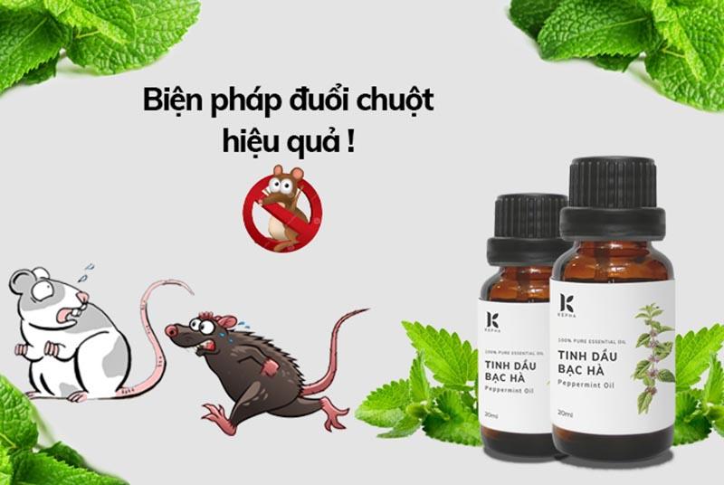 Tinh dầu vũ khí lợi hại đuổi loài chuột chù ra khỏi nhà