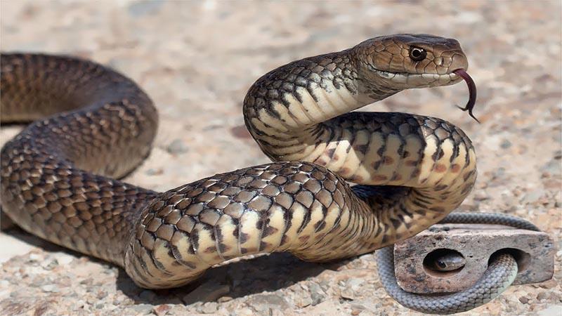 Những cách vừa đuổi rắn hiệu quả vừa an toàn