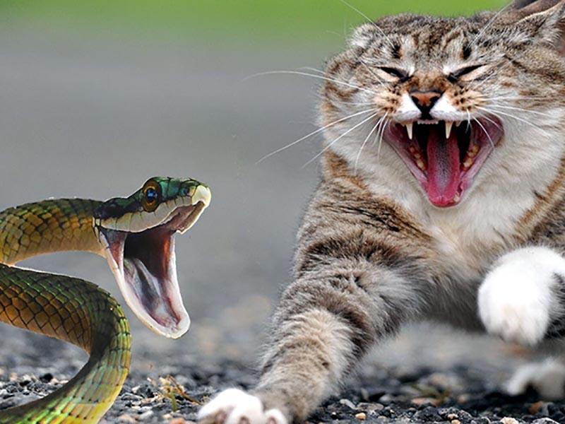 Nuôi chó mèo để đuổi rắn
