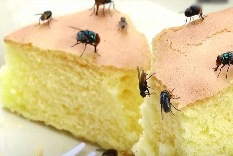 Cách xua đuổi ruồi hiệu quả luôn là điều được nhiều người quan tâm