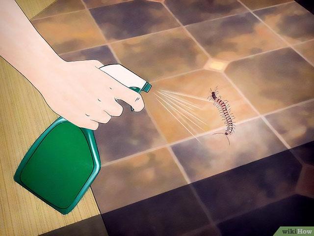 dùng thuốc diệt côn trùng tiêu diệt rết