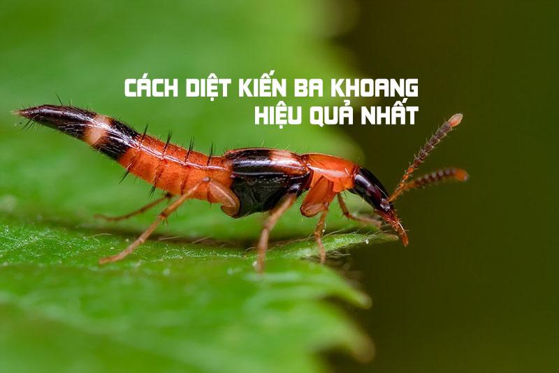 Cách diệt kiến ba khoang
