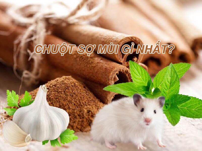 Chuột sợ mùi gì nhất?