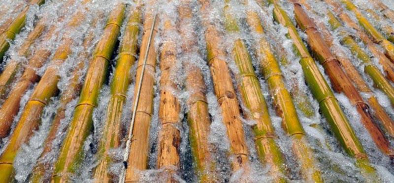 Ngâm gỗ trong nước là phương pháp phổ biến để giúp gỗ chống mối mọt