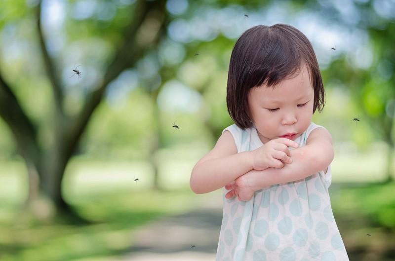 Nhận biết vết cắn của các loài côn trùng