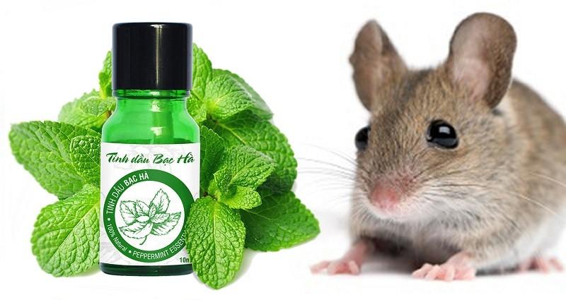 Tinh dầu bạc hà đuổi chuột