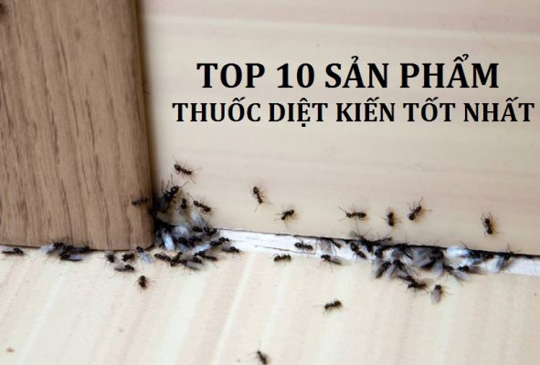 Thuốc diệt kiến tốt nhất