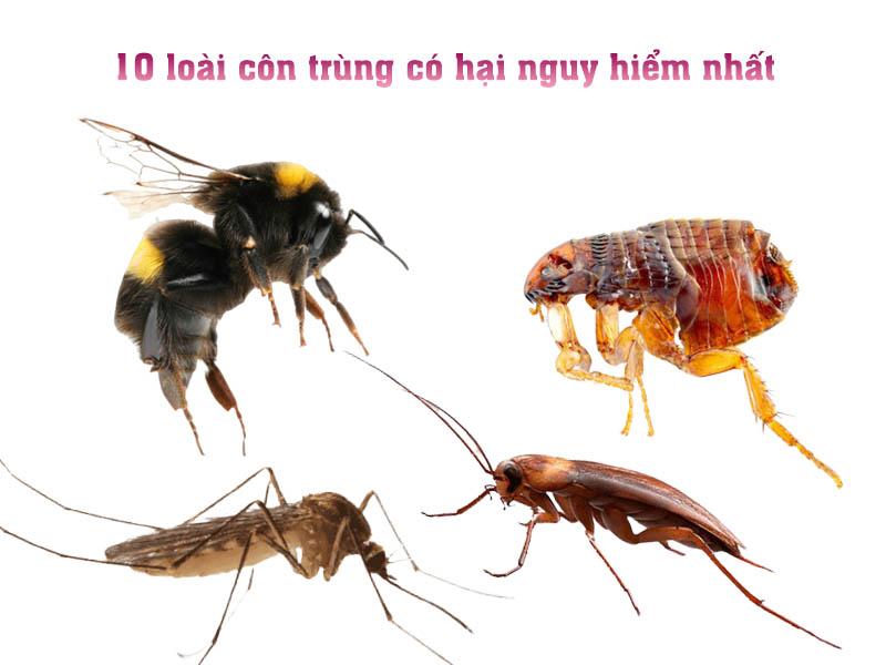 Tổng hợp 10 loài côn trùng có hại nguy hiểm bậc nhất Việt Nam