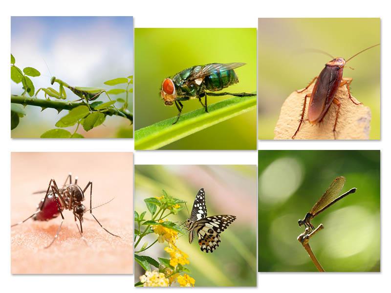 Côn trùng là các loài động vật thân mềm số lượng nhiều nhất trái đất