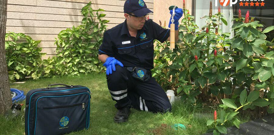 Công ty dịch vụ diệt côn trùng tại tphcm