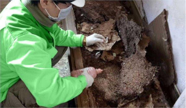 Công ty diệt côn trùng hà nội