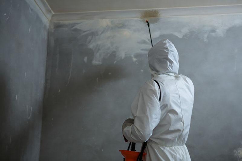 Công ty diệt côn trùng tại Hà Nội cung cấp giải pháp cho nhà ở, doanh nghiệp, văn phòng, trường học, bệnh viện...