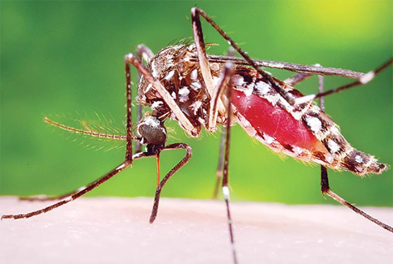 Muỗi gây ra nhiều bệnh sốt xuất huyết, sốt rét là laoi2 côn trùng gây ra nhiều ca tử vong nhất mỗi năm