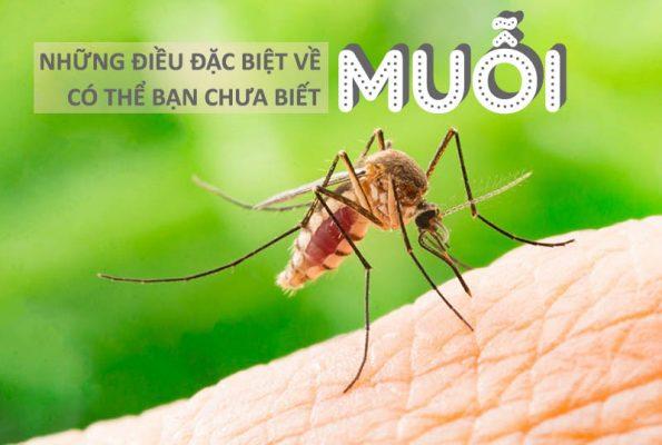 Loài muỗi và những điều đặc biệt về loài côn trùng nguy hiểm nhất hành tinh