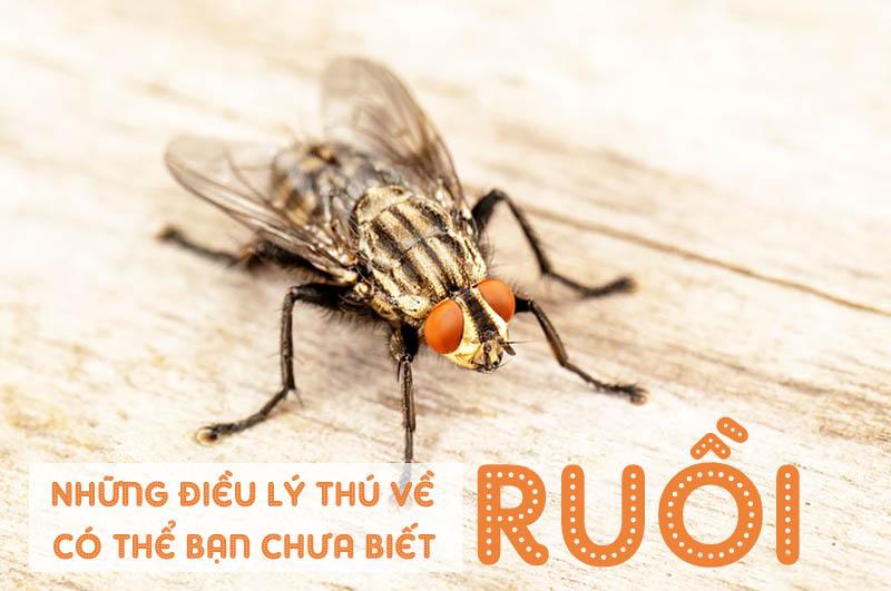 Những điều lý thú về loài ruồi có thể bạn chưa biết