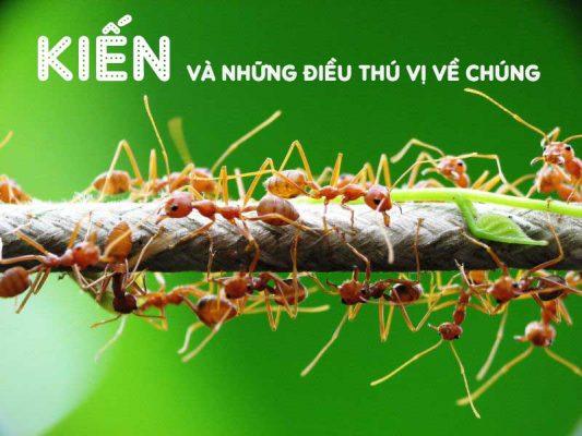 Loài kiến và những điều thú vị về chúng có thể bạn chưa biết
