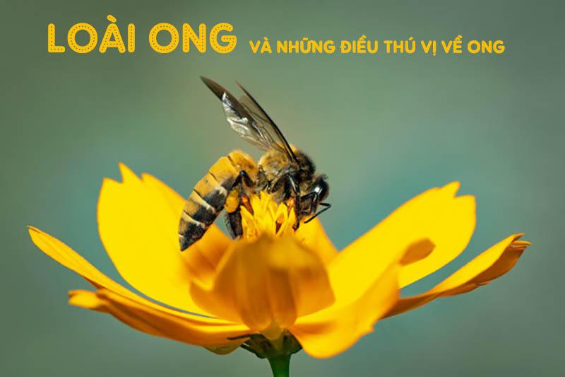 Loài ong và những điều thú vị về loài côn trùng này