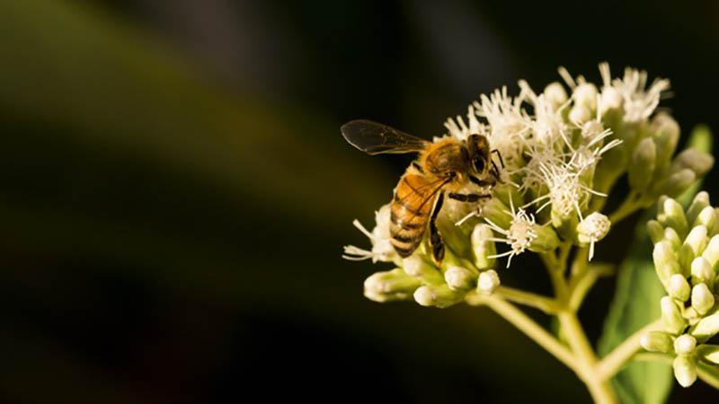 Ong là loài có tập tính xã hội cực cao chúng có nhiều giá trị kinh tế