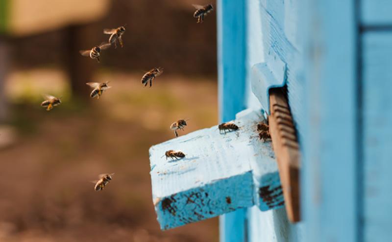 Các sản phẩm của ong mang đến giá trị kinh tế cao