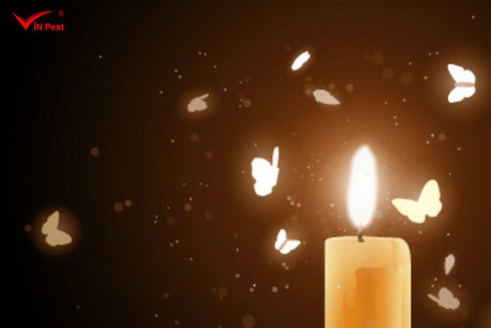 Diệt thiêu thân bằng đèn hoặc nến